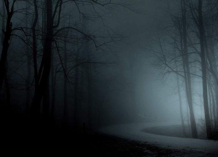 Туман в лесу. Фотографии