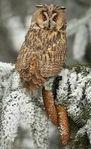 Превью сова зимой (150x245, 13Kb)