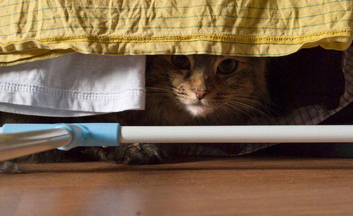 коты шпионы (5) (700x429, 50Kb)