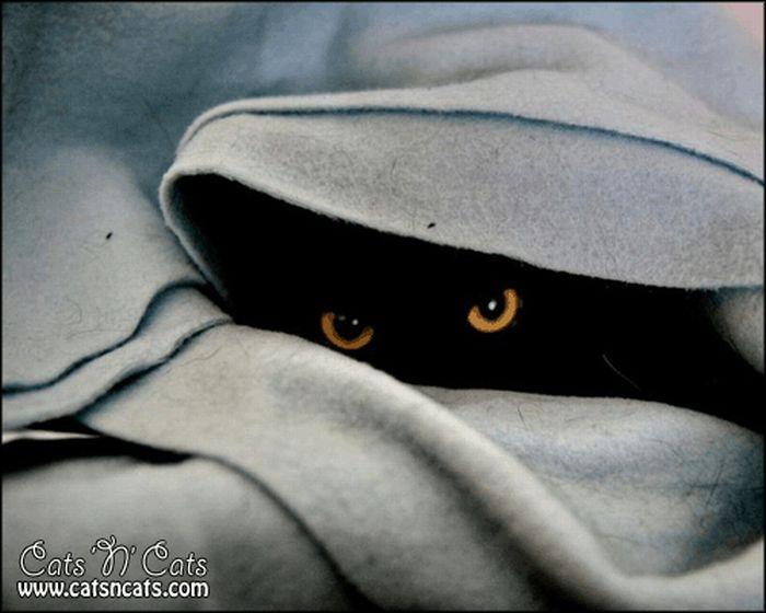 коты шпионы (12) (700x560, 47Kb)