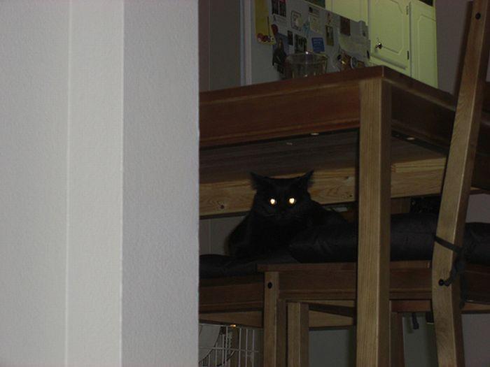 коты шпионы (13) (700x525, 29Kb)