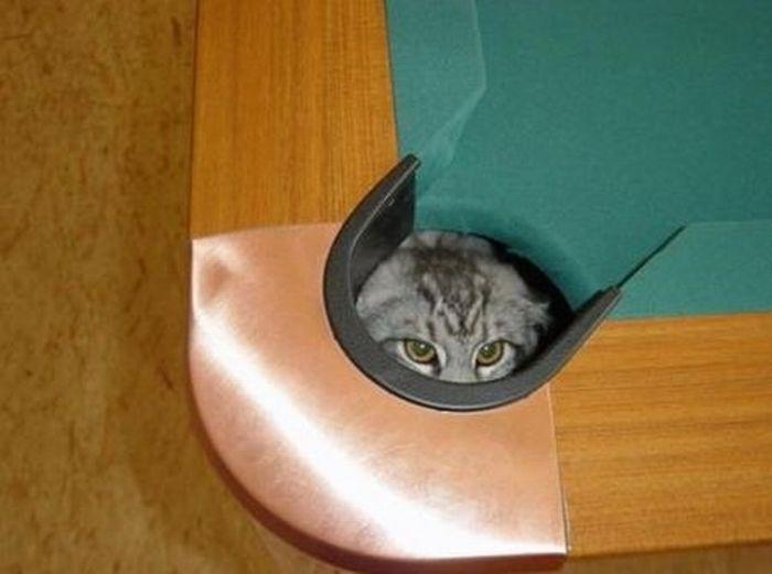 коты шпионы (15) (700x521, 34Kb)