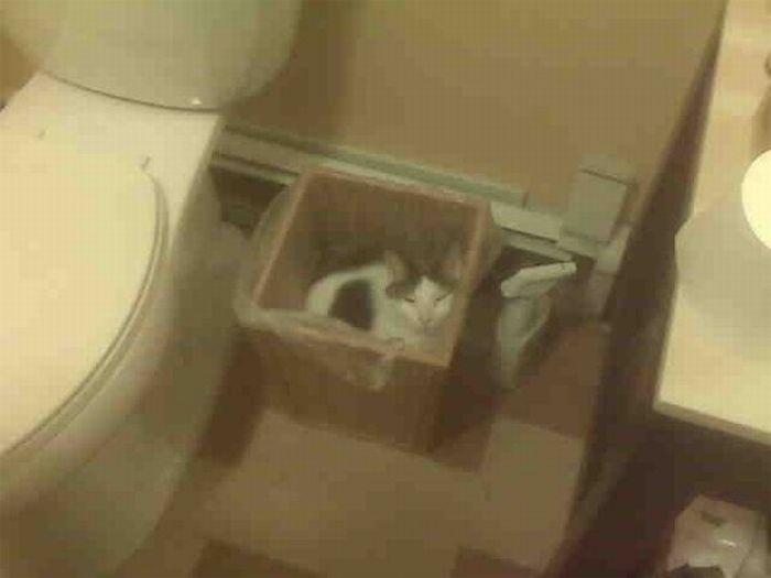 коты шпионы (23) (700x525, 24Kb)
