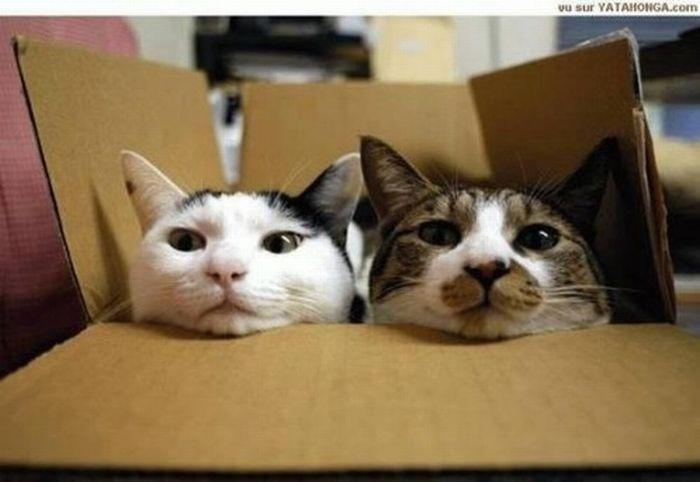 коты шпионы (24) (700x482, 36Kb)