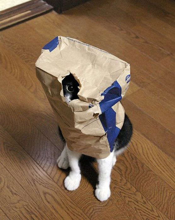 коты шпионы (25) (556x700, 61Kb)