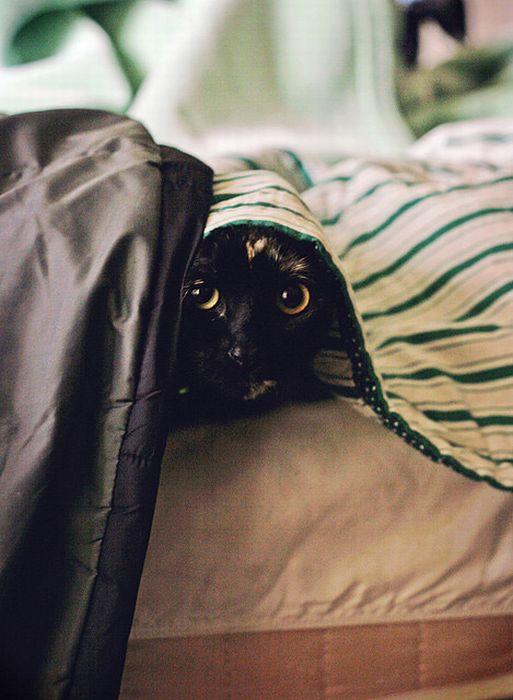 коты шпионы (27) (513x700, 53Kb)