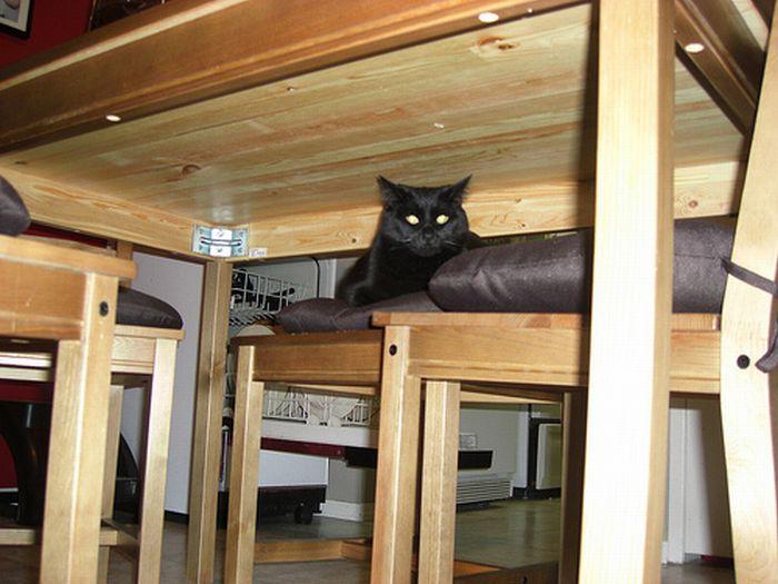коты шпионы (28) (700x525, 59Kb)