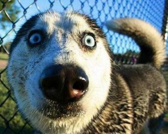 собака симпатичная (555x444, 70Kb)