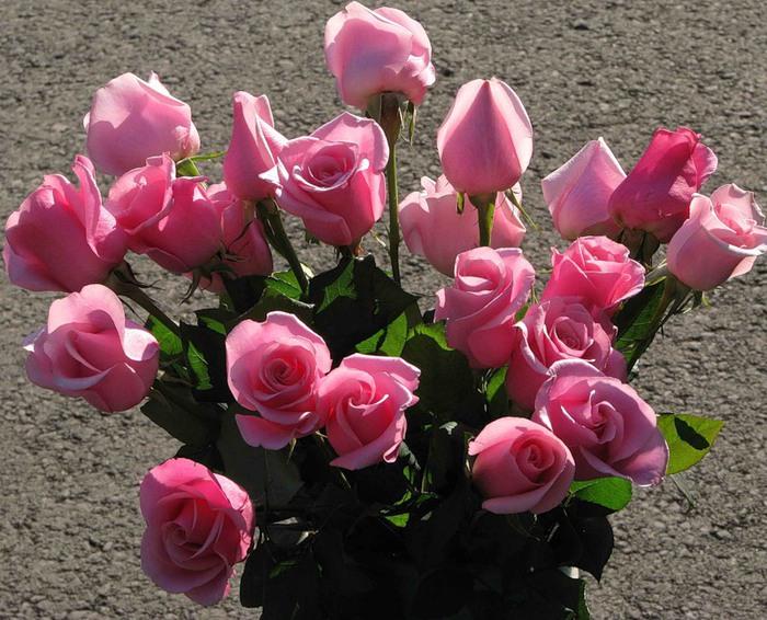 Новые роз розы (700x566, 138Kb)