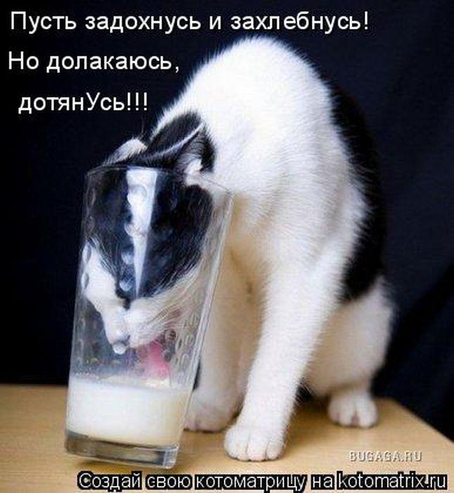 1313736286_kotomatritsa-15 (645x700, 62Kb)