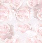 Превью rose8032 (171x178, 6Kb)