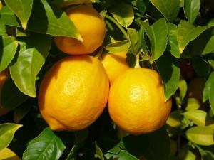 limon1-300x225 (300x225, 24Kb)