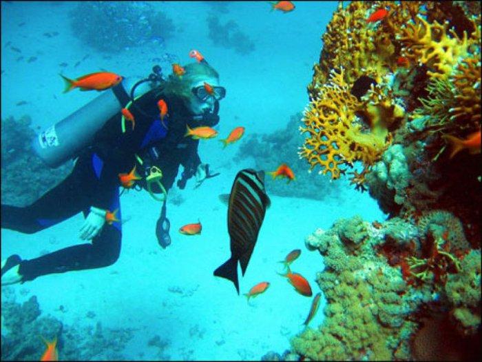 Фото.  Дайвинг на острове Маврикий.