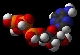 280px-ATP-3D-vdW (280x195, 32Kb)