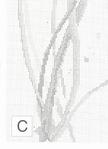 Превью 7 (508x700, 243Kb)