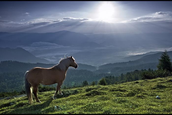 Лошадь солнышко встречает 700x466 108kb
