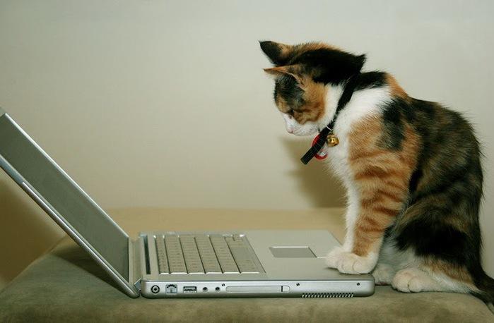 кошка за ноутбуком Cat (700x458, 67Kb)
