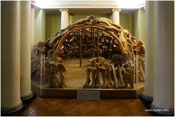 Каркас позднепалеотического жилища из костей мамонта. Киев. Зоологический музей
