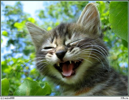кот смеется (550x429, 55Kb)