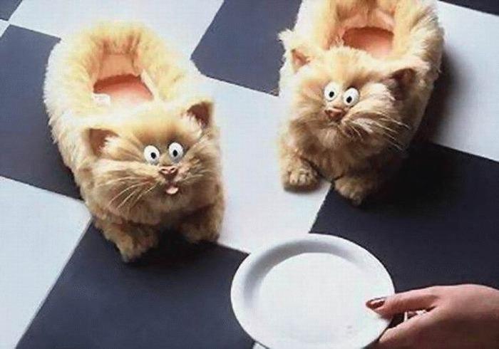 тапочки коты (700x490, 71Kb)