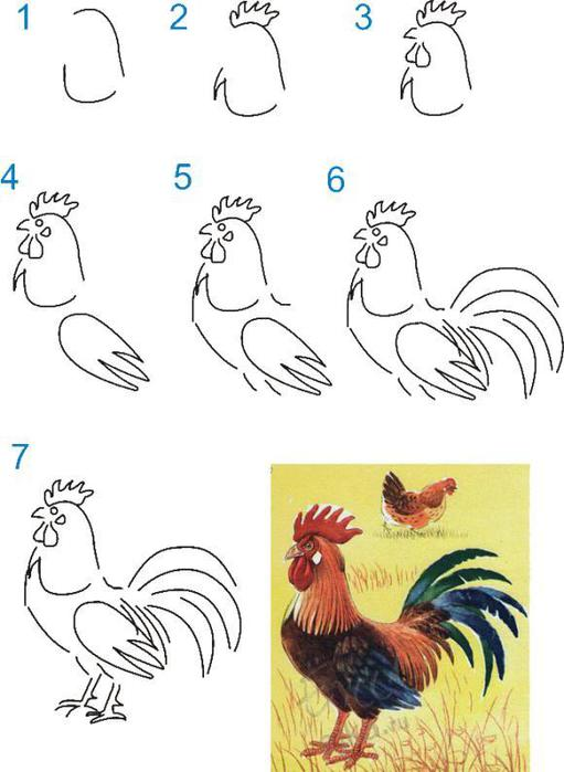 Как научиться рисовать петуха