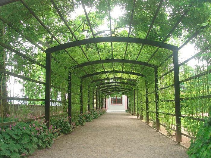 Замки Дорнбург-на-Заале 51730