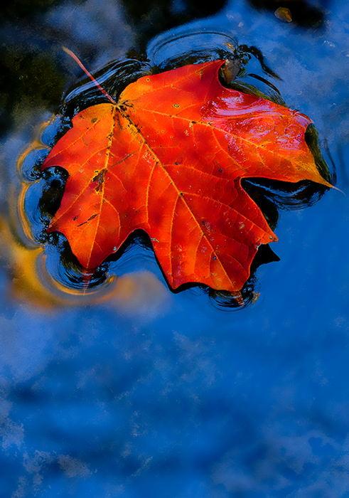 leaf-art-13 (491x700, 90Kb)