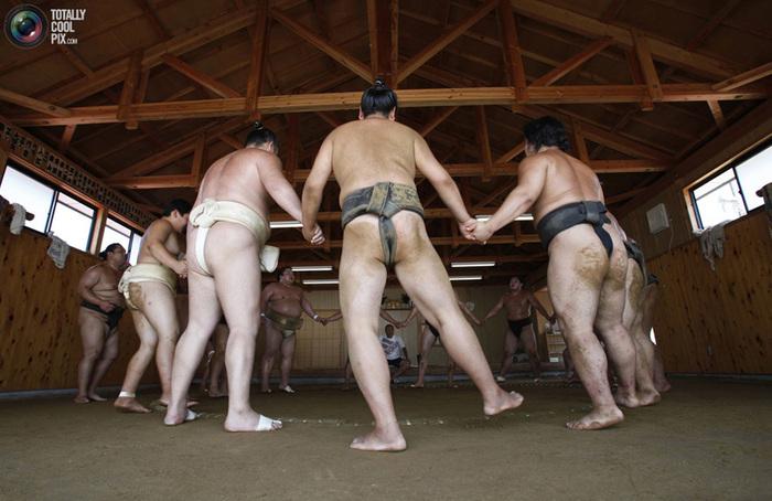 sumo_008 (700x454, 130Kb)