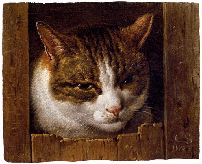 4000579_a_cat_peeping_through_a_fencelarge1 (700x565, 178Kb)