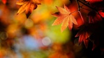 ������ Autumn-leaves-nature_1920x1080 (700x393, 62Kb)