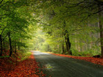 ������ Nature_Seasons_Autumn_The_leaves_on_the_roadside_021686_ (700x525, 194Kb)