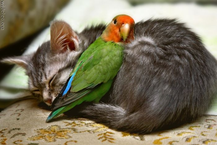 animals_friendship_74 (700x466, 57Kb)
