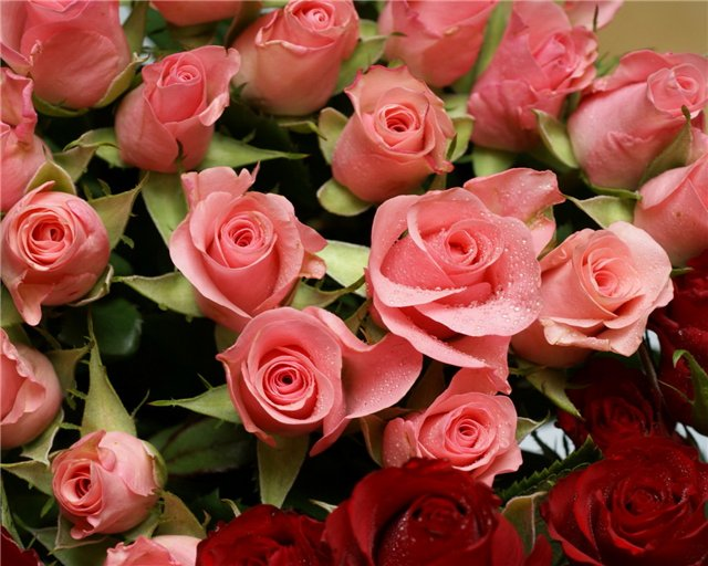 розы розов. и красн. букет (640x512, 76Kb)