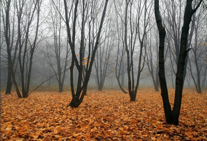 4514961_osen_v_lesy (700x476, 446Kb)