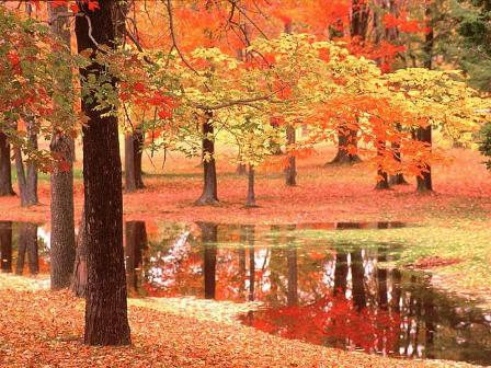 1314899007_autumn_trees_stream (448x336, 47Kb)