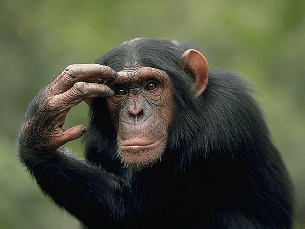3507063_39786189_monkey_gif (600x450, 80Kb)