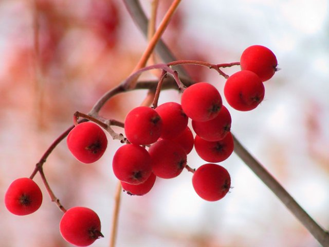 autumn kiss_ (17) (640x480, 41Kb)