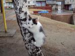 Превью Люда приехала   тусик на деревьях 012 (700x525, 186Kb)