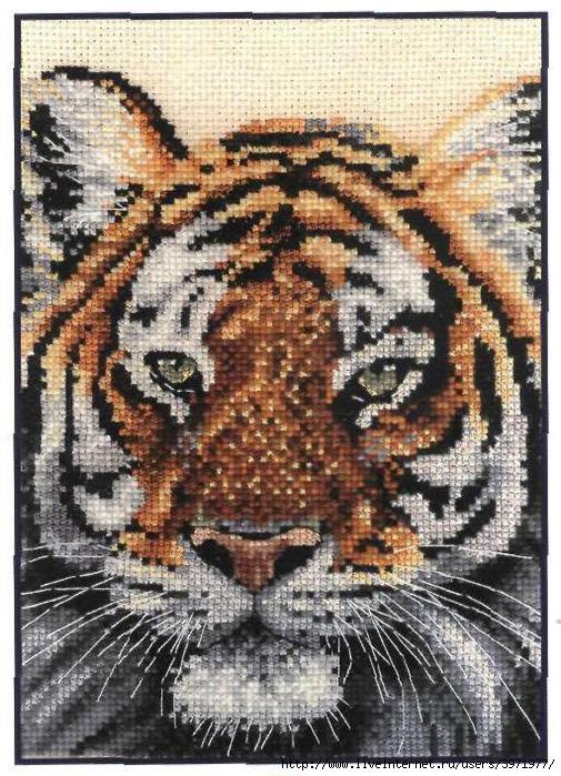 3971977_K5198_Tiger (505x700, 252Kb) .