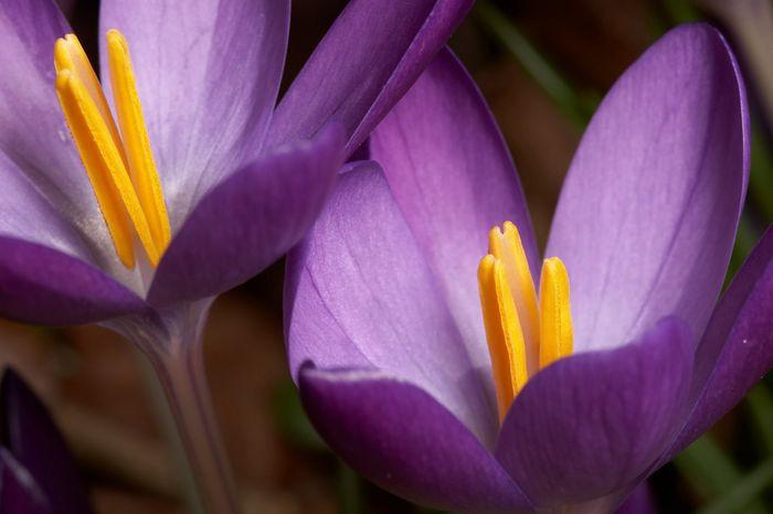 Макро-фото цветов от фотографа Brian Valentine