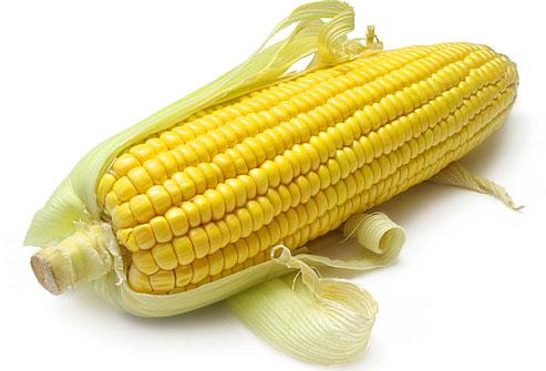 Кукуруза стала источником дорогостоящего лекарства
