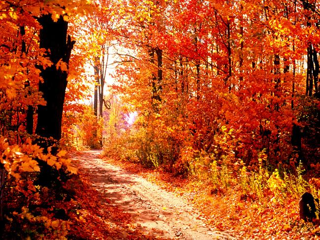 """Фото-""""Осень-рыжая подружка."""