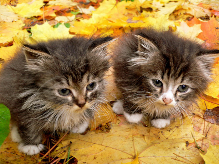 Home_Cat1_800x600 (700x525, 191Kb)