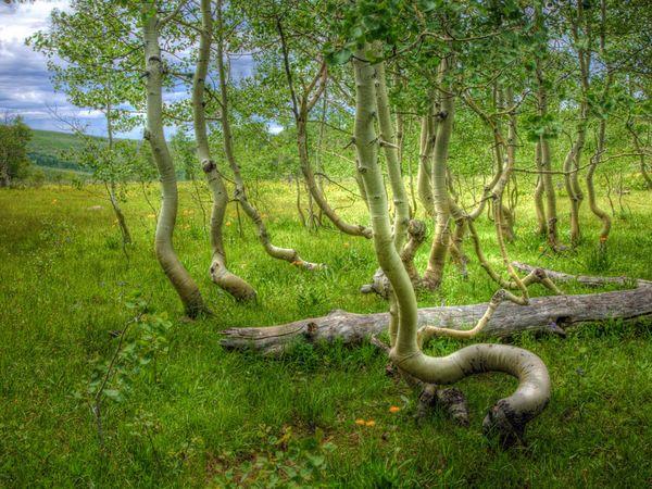 деревья (600x450, 85Kb)