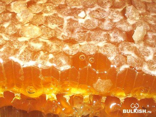 Куплю мед оптом постоянно в неограниченном количестве (мёд подсолнечника...