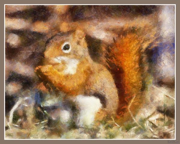 Squirrel  (600x482, 124Kb)