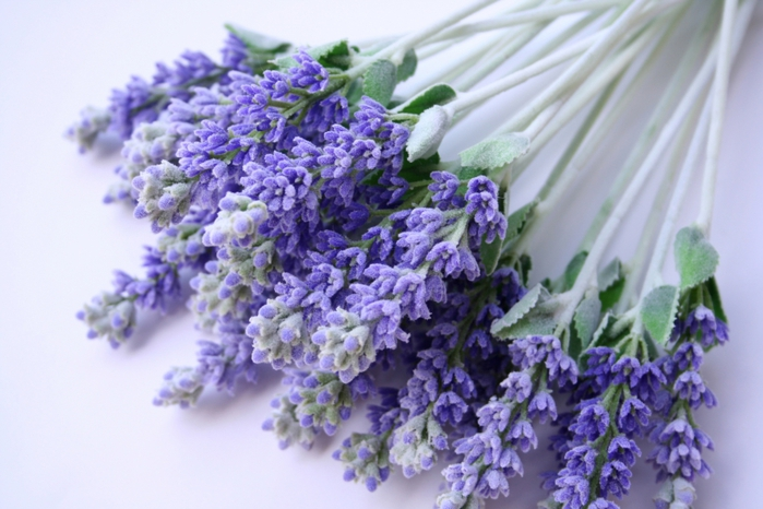 4278666_Lavender_Flowers (700x466, 231Kb)