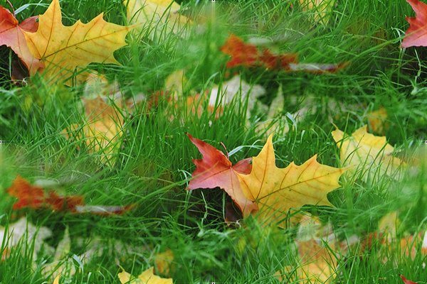 3424885_1255195529_48024138_leaves1 (600x400, 76Kb)