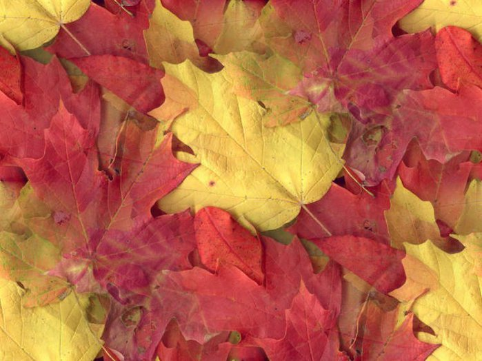 3424885_Autumn_Leaves1 (700x524, 75Kb)