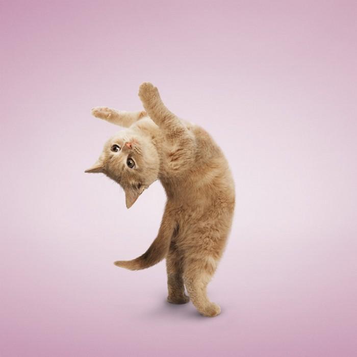 Yoga_Kittens_3 (700x700, 59Kb)